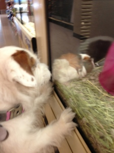 Guinea Pigs in Glass Houses
