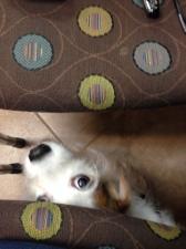 Do the Polka Dots Hide My Spots?