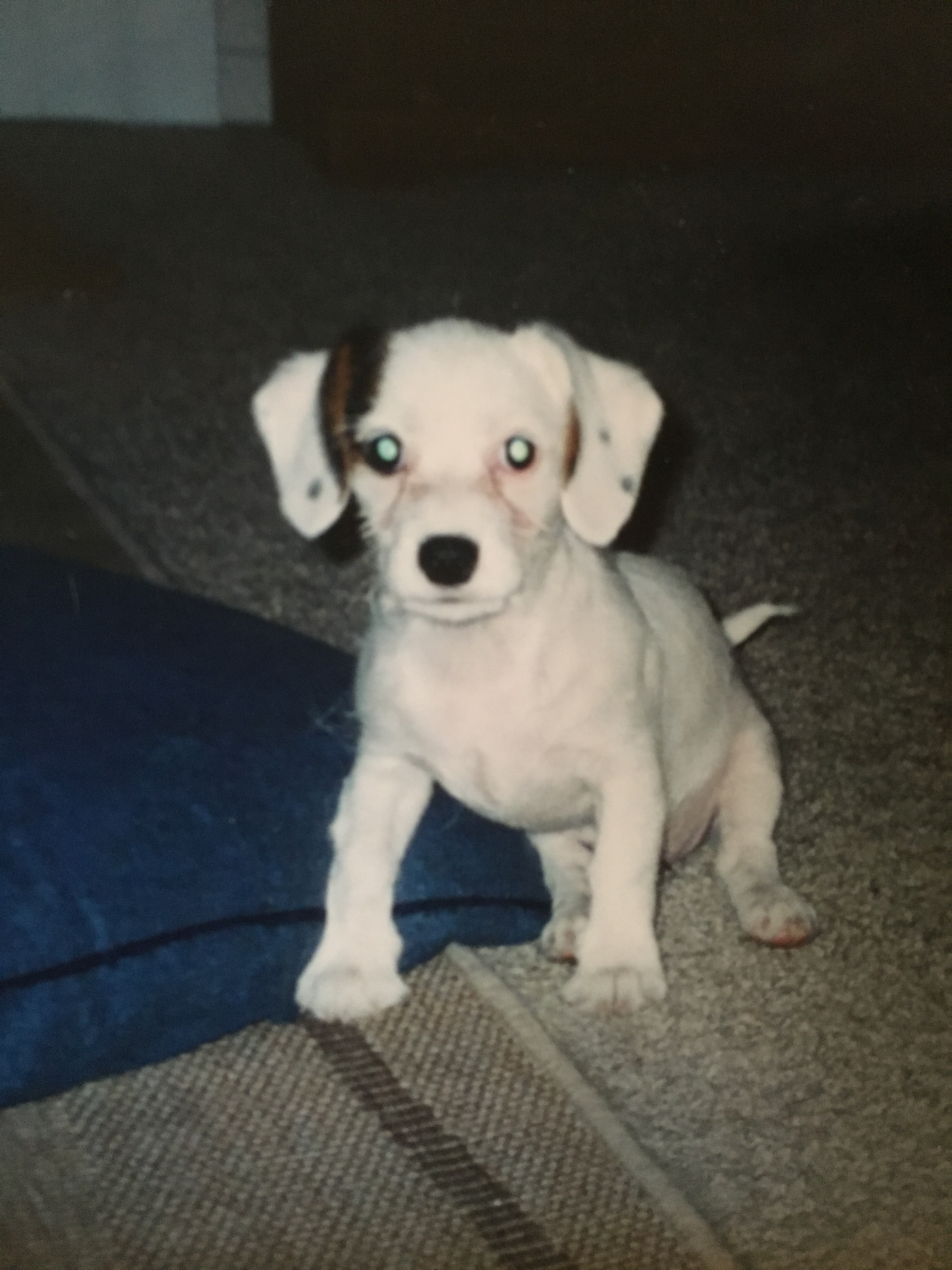 "Charlee Wants to Know: Was I an ""Ugly Duckling"" Puppy?"